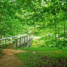 Trail at Woodford State Park by Carolyn Dean